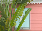 Palm and Pineapple Shutters Detail  Great Abaco Island  Bahamas