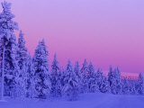 Sunset in the Lappish Winter  Finland