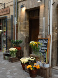 Florist Shop  Languedoc-Roussillon  France