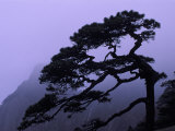 Seeing Off Pine Tree on Mt Huangshan (Yellow Mountain)  China