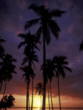 Palm Trees at Sunset  Puerto Rico