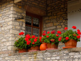 Potted Geraniums on Stone Wall  Burgundy  France