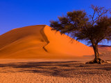 Flourishing Tree with Soussevlei Sand Dune  Namibia