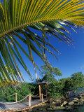 Sonesta Island  Aruba  Caribbean