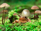 Small Toad Surrounded by Mushrooms  Jasmund National Park  Island of Ruegen  Germany