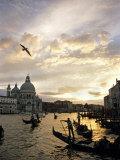Grand Canal  Santa Maria della Salute Church  Gondolas  Venice  Italy