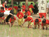 South Korean Kindergarten Pupils Plant Rice Seedlings