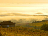 Autumn Morning Fog in Pouilly-Fuisse Vineyards  France