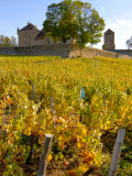 Vineyard View of Chateau de Pierreclos  Burgundy  France