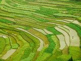 Farmland by the Three Gorges of the Yangtze River  China