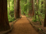 Redwood Forest  Rotorua  New Zealand