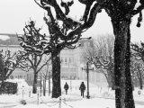 Winter  Mirabellgarten  Salzburg  Austria