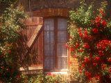 House with Summer Roses in Bloom  Vaucluse  France
