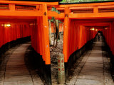 Torri Gates Lining Mountain Pathways at Fushimi-Inari  Kyoto  Japan