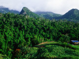 Overhead of Forested Mountains and Cane Field  Nadi  Fiji