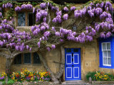 Cottage with Wisteria in Flower  Broadway  United Kingdom