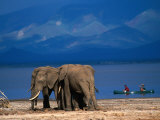 Elephants Standing on the Shore While Onlookers Pass Them in a Canoe  Lake Manyara NP  Tanzania