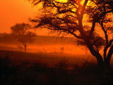 Sunset Over Trees in Park  Kgalagadi Transfrontier Park  South Africa