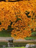 Autumn Leaves at Nitobe Japanese Garden  University of British Columbia  Vancouver  Canada
