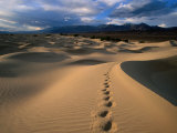 Footprints in Mesquite Sand Dunes  Death Valley National Park  USA