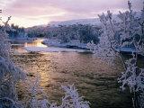 Snowy Riverscape  Vindelfjallen Nr  Umea  Sweden