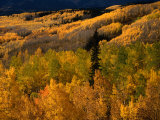 Autumn Colours of the Elk Mountains in Colorado  USA