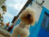 Dog in Zona Centro  Puerto Vallarta  Mexico