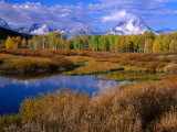 Trees and Lake During Autumn with Mt Moran in Distance  Grand Teton National Park  USA