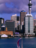 Sailboat with City in Background  Auckland  New Zealand