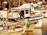 Fishing Fleet  Fishermans Wharf  San Francisco  United States of America
