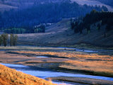 Lamar River Valley with Bison Crossing in Distance  Yellowstone National Park  USA