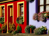 Cottage Facades Decorated with Flowers  Eyeries  Ireland