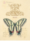 Filigree Papillon