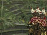 Legong Dancers  Bali  Indonesia