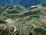 Mountainside Landscape of Rice Terraces  China
