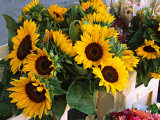 Market Sunflowers  Nice  France