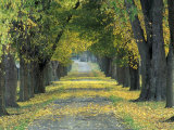 Tree-Lined Road in Autumn  Louisville  Kentucky  USA