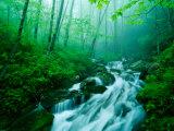 Linn Cove Creek Cascading Through Foggy Forest  Blue Ridge Parkway  North Carolina  USA