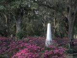 Bonaventure Cemetery  Savannah  Georgia  USA