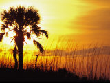 Sunset near Folley Beach  Charleston  South Carolina  USA