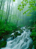 Linn Cove Creek Cascading Through Foggy Forest  Blue Ridge Parkway  North Carolina  USA
