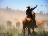 Cowboy Working the Herd on a Cattle Drive through Central Oregon  USA