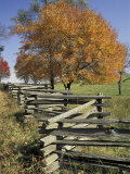 Split Rail Fence and Tree  Hensley Settlement  Cumberland Gap National Historic Park  Kentucky  USA