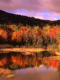 Small Pond and Fall Foliage Reflection  Katahdin Region  Maine  USA