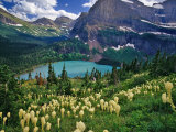 Beargrass above Grinnell Lake  Many Glacier Valley  Glacier National Park  Montana  USA