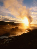 Bison Silhouetted at Sunrise as Old Faithful Erupts  Yellowstone National Park  Wyoming  USA
