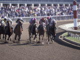 Thoroughbred Horse Racing at Keenland track  Lexington  Kentucky  USA
