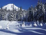 Snow Covered Trees and Moguls of Mt Hood  Oregon  USA