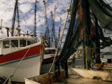 Shrimp Boats Tied to Dock  Darien  Georgia  USA