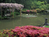 Japanese Garden with Rhododendrons and Wysteria  Seattle  Washington  USA